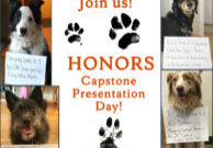 Pictures of dogs and capstone titles