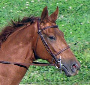 Rescue Horse Profile