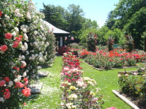 photo of rose garden