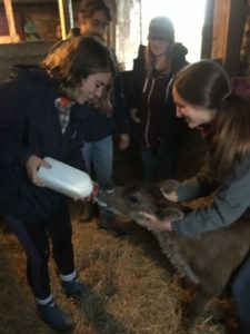 2 girls feeding milk to a goat