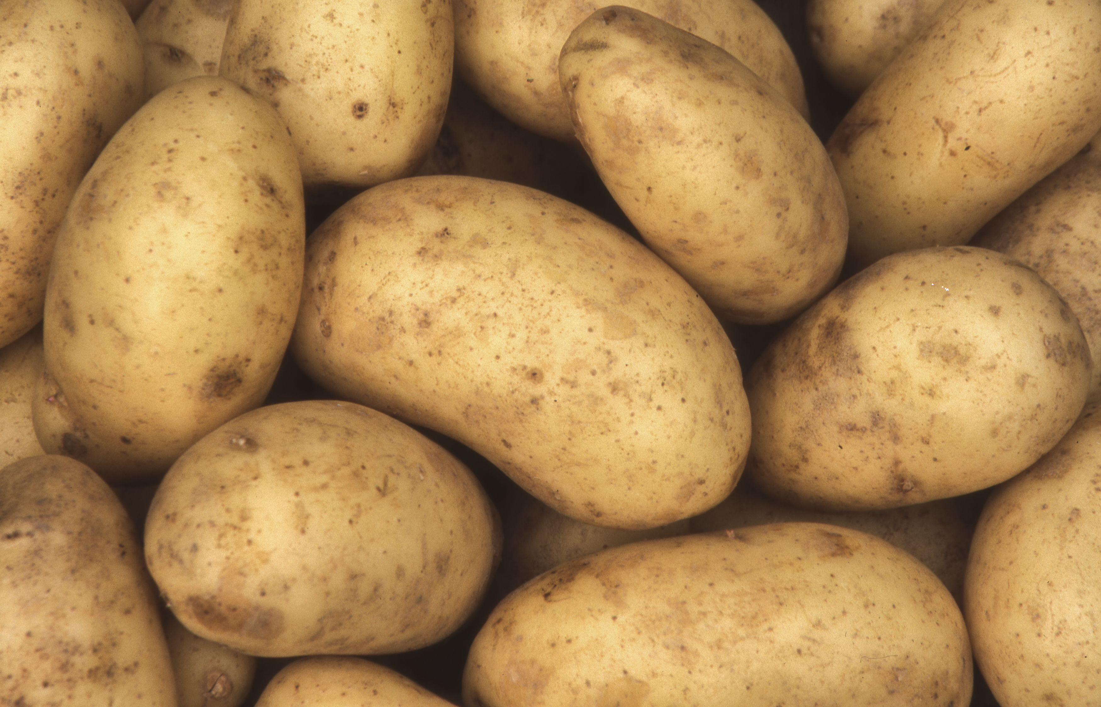 image frame is filled with large, white potatoes!