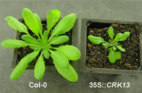 lab plants