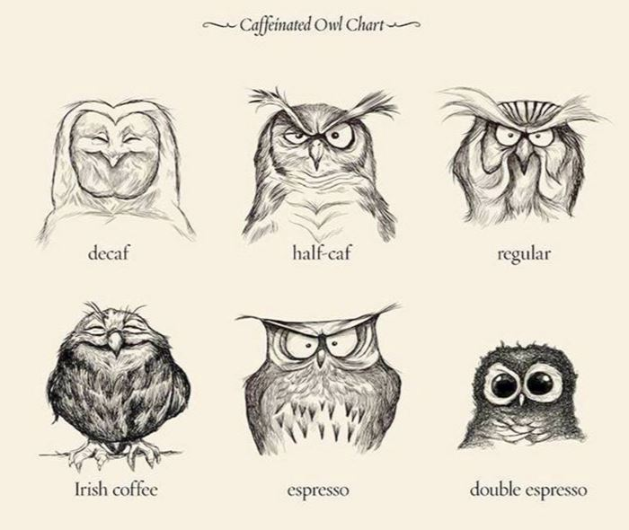 images of various owls in states of alertness