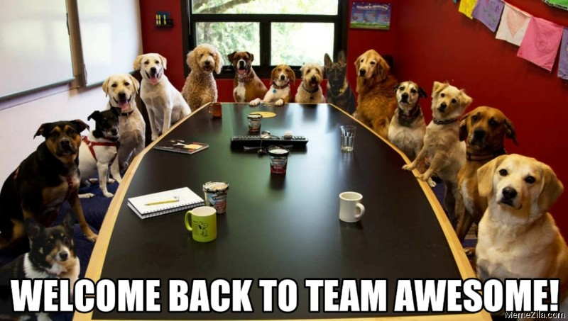 Welcome-back-to-team-awesome-meme dogs seated around conference table